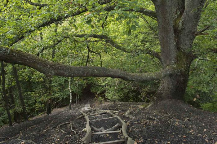 Treppen Saarland urwald vor den toren der stadt tourismus zentrale saarland gmbh